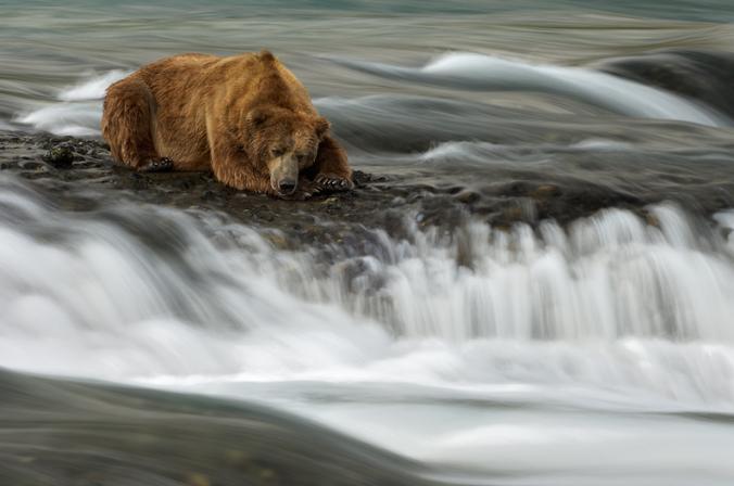 bear sad