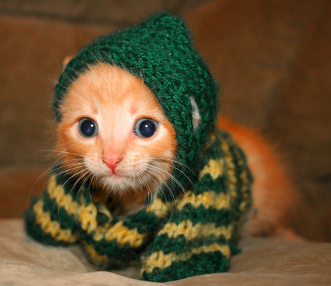 kitten-in-a-sweater-kittens-5890480-670-578
