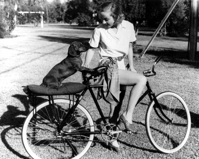 lombard-dog-bicycle_opt