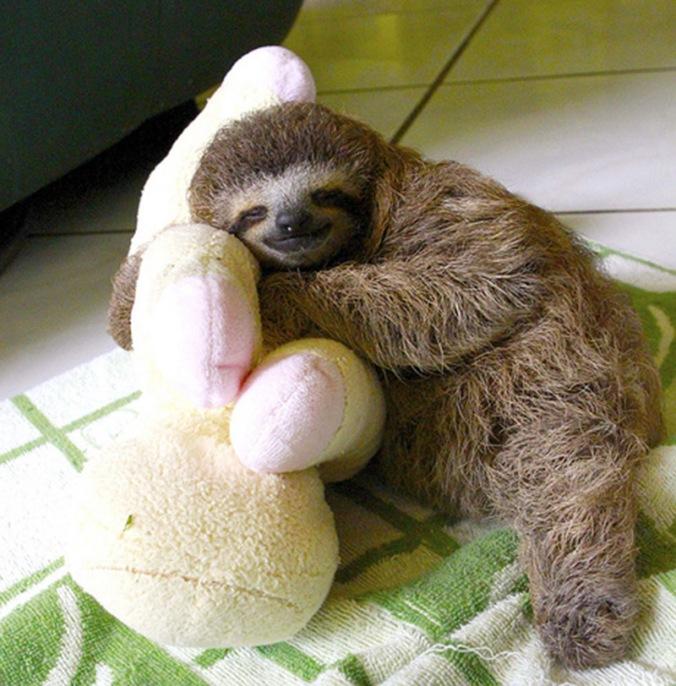 sweet-sleeping-baby-sloth-lucy-cooke-IIHIH