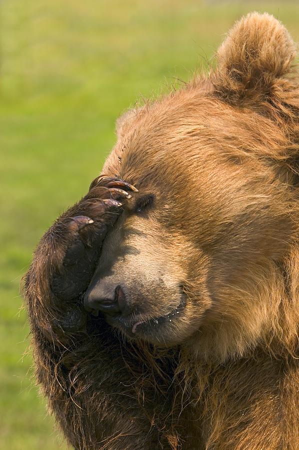 disappointed-bear-carson-ganci